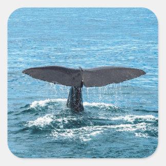クジラのひれ スクエアシール