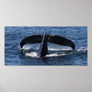 クジラの尾の物語 ポスター