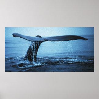 クジラの肝蛭 ポスター