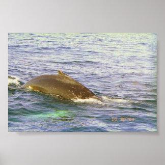 クジラのhumpback ポスター