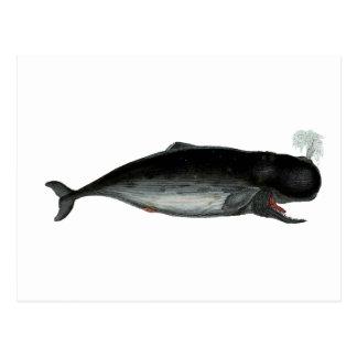 クジラを笑わせるヴィンテージ ポストカード