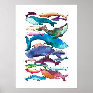 「クジラ、イルカ及びネズミイルカ」ポスター(小型の大きい) ポスター