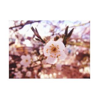 クラシックで白い及び金敏感で大切な花 キャンバスプリント