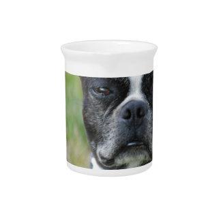 クラシックなボストンテリア犬 ピッチャー