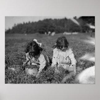 クランベリーの写真を選んでいる若い女の子 ポスター
