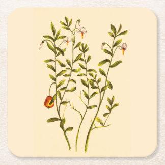 クランベリーの植物のヴィンテージの絵 スクエアペーパーコースター