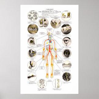 クラーク歯科医のための歯科健康の図表 ポスター