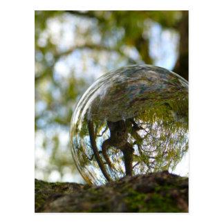 クリスタル・ボールを通して見られる木 ポストカード