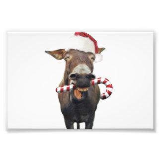 クリスマスのろば-サンタのろば-ろばサンタ フォトプリント