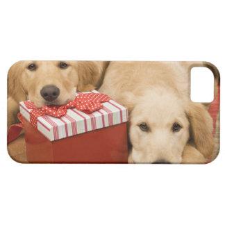 クリスマスのギフトを持つゴールデン・リトリーバーの子犬 iPhone SE/5/5s ケース