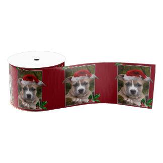 """クリスマスのピットブルの子犬3""""グログランリボン グログランリボン"""