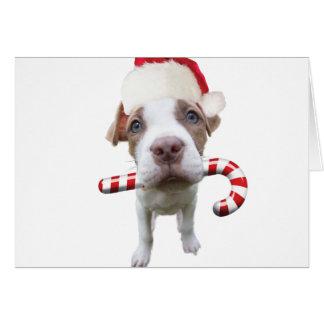 クリスマスのピットブル-サンタのピットブル-サンタクロース犬 カード
