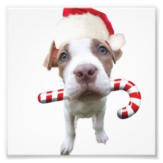 クリスマスのピットブル-サンタのピットブル-サンタクロース犬 フォトプリント
