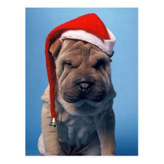 クリスマスの帽子を持つSharかわいいPeiの子犬 ポストカード