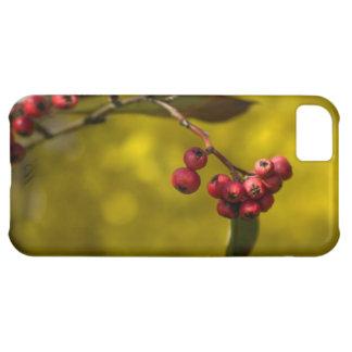 クリスマスの赤の果実 iPhone5Cケース