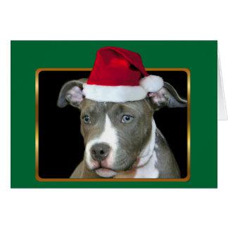 クリスマスの青いピットブルの子犬のnotecard カード