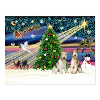 クリスマスの魔法-ワイヤーフォックステリア犬(2) ポストカード
