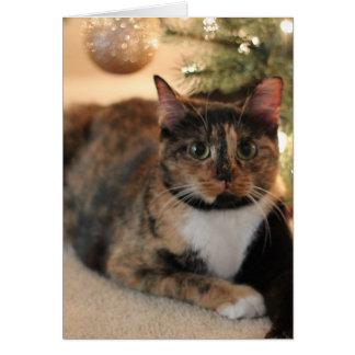 クリスマスツリーの下のさらさの子猫 カード