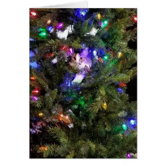 クリスマスツリーの子猫 カード
