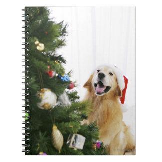クリスマスツリーを見るゴールデン・リトリーバー ノートブック