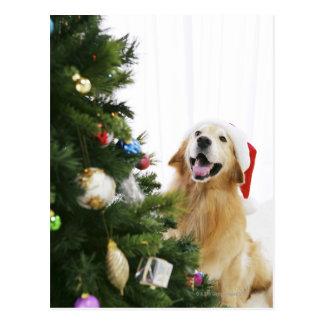 クリスマスツリーを見るゴールデン・リトリーバー ポストカード