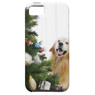 クリスマスツリーを見るゴールデン・リトリーバー iPhone SE/5/5s ケース