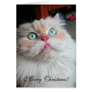 クリスマス猫 カード