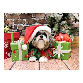 クリスマス-シーズー(犬) Tzu - Vince ポストカード
