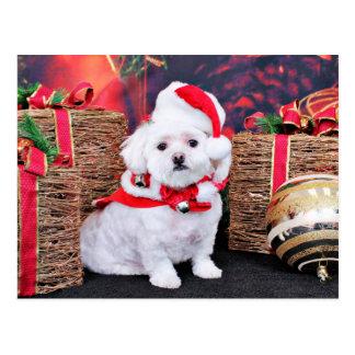 クリスマス-マルチーズ- Zoey ポストカード