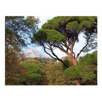 クリミア、山Aiペトリの眺め ポストカード
