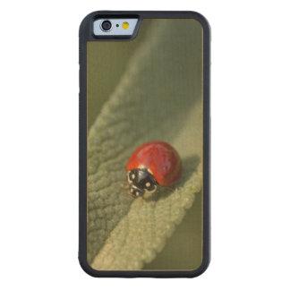 クリーブランドの賢人の輻合作用のてんとう虫カブトムシ CarvedメープルiPhone 6バンパーケース