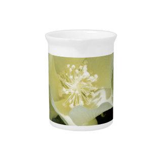 クリームがかった白の綿植物の花 ピッチャー