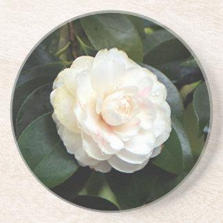 クリーム色の白いツバキの花 コースター
