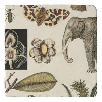 クリーム色の背景で絵を描かれる分類された動物 トリベット