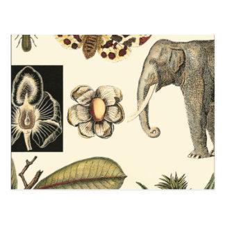 クリーム色の背景で絵を描かれる分類された動物 ポストカード