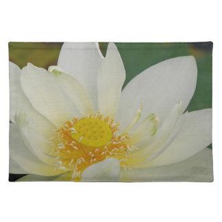 クリーム色水Lily02.JPG ランチョンマット