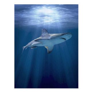 クルージングの鮫 ポストカード
