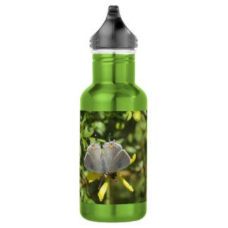 クレオソート・ブッシュの灰色のHairstreak蝶 ウォーターボトル