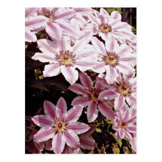 クレマチスの花 ポストカード