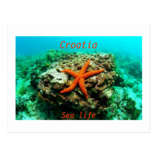 クロアチア-海洋生物 はがき