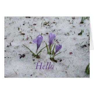 クロッカスの春の挨拶 カード