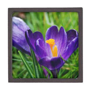 クロッカスの花 ギフトボックス