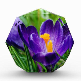 クロッカスの花 表彰盾