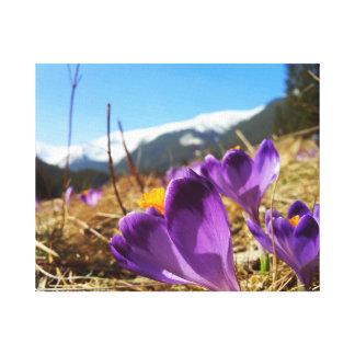 クロッカス、Tatras キャンバスプリント