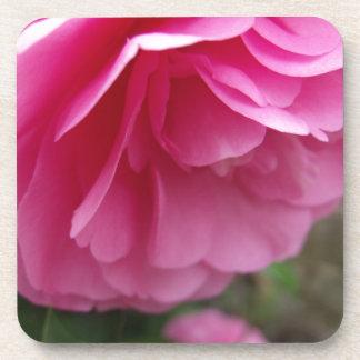 クローズアップのピンクの花のピンクCamillia コースター