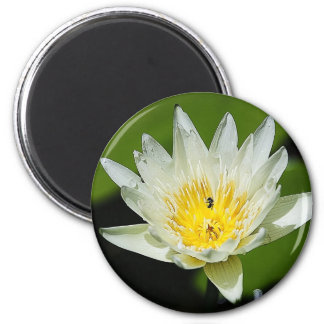 クローズアップの白濁水ユリの花および蜂の磁石 マグネット