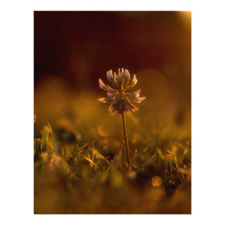 クローバーの花 レターヘッド
