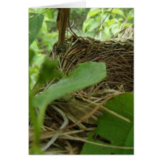 クワの最近造られたしかし空の鳥の巣 カード