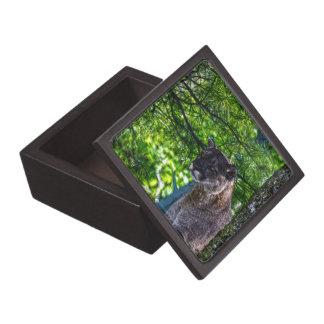 クーガーのオオヤマネコの大きな猫の芸術のデザイン6 ギフトボックス