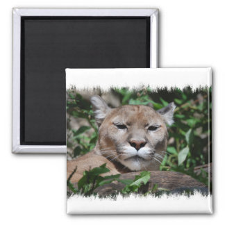 クーガーの捕食動物の正方形の磁石 マグネット